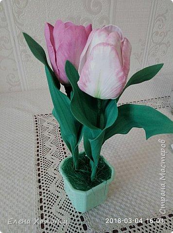 Тюльпаны фото 11