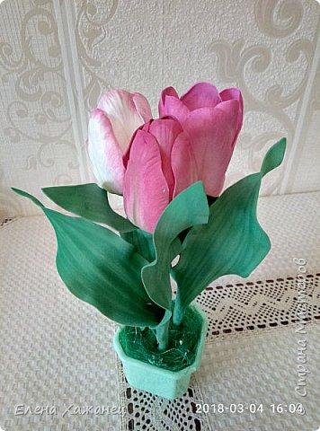 Тюльпаны фото 9