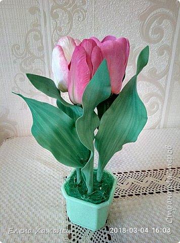Тюльпаны фото 13