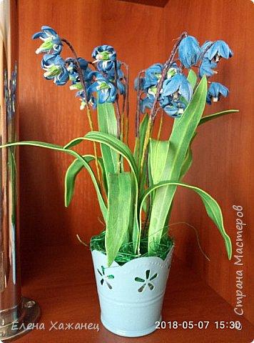 Воспоминание о первоцветах фото 5