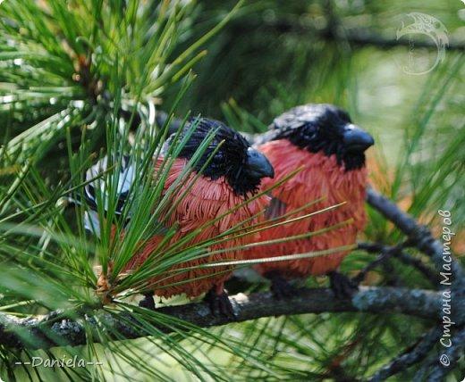 Я давно хотела сделать этих красногрудых пушистиков, но новогодние снегири летом как-то не делаются... Неожиданный заказ на эту парочку все исправил)) фото 2