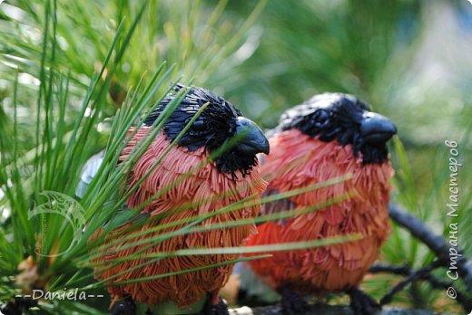 Я давно хотела сделать этих красногрудых пушистиков, но новогодние снегири летом как-то не делаются... Неожиданный заказ на эту парочку все исправил)) фото 3