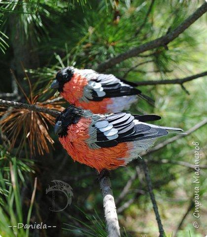 Я давно хотела сделать этих красногрудых пушистиков, но новогодние снегири летом как-то не делаются... Неожиданный заказ на эту парочку все исправил)) фото 11