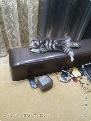 """""""У кого есть кошка, тот может не бояться одиночества""""…  И так  ...-решили мы \с дочкой\ купить котенка! Милый,пушистый комочек! фото 2"""