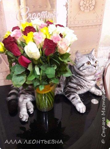 """""""У кого есть кошка, тот может не бояться одиночества""""…  И так  ...-решили мы \с дочкой\ купить котенка! Милый,пушистый комочек! фото 11"""