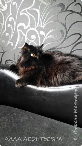 """""""У кого есть кошка, тот может не бояться одиночества""""…  И так  ...-решили мы \с дочкой\ купить котенка! Милый,пушистый комочек! фото 14"""