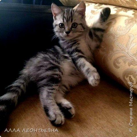 """""""У кого есть кошка, тот может не бояться одиночества""""…  И так  ...-решили мы \с дочкой\ купить котенка! Милый,пушистый комочек! фото 1"""