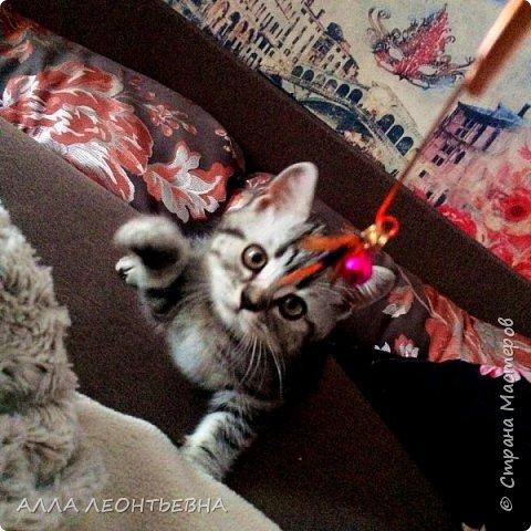 """""""У кого есть кошка, тот может не бояться одиночества""""…  И так  ...-решили мы \с дочкой\ купить котенка! Милый,пушистый комочек! фото 3"""