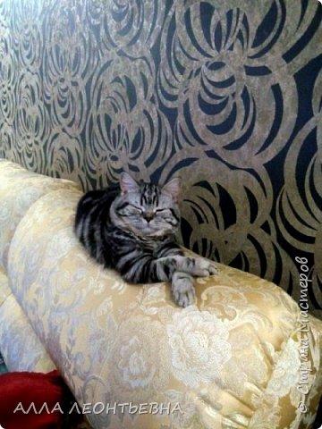 """""""У кого есть кошка, тот может не бояться одиночества""""…  И так  ...-решили мы \с дочкой\ купить котенка! Милый,пушистый комочек! фото 6"""