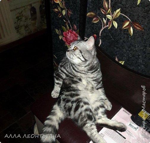 """""""У кого есть кошка, тот может не бояться одиночества""""…  И так  ...-решили мы \с дочкой\ купить котенка! Милый,пушистый комочек! фото 9"""