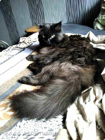 """""""У кого есть кошка, тот может не бояться одиночества""""…  И так  ...-решили мы \с дочкой\ купить котенка! Милый,пушистый комочек! фото 15"""