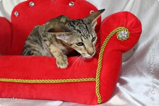 Сделала диванчик в ретро стиле для фотоссесии кошек и щенят. фото 2