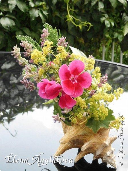 Добрый день! Этим летом я решила осуществить еще одну свою мечту - научится цветочному дизайну. Очень люблю цветы, травки-муравки, деревья и вообще все растения. Уже третий месяц я учусь создавать красоту! Очень увлекательно работать с цветами! Я взяла небольшой курс по цветочному дизайну. Дома делаю оранжировки из того что под рукой, беру цветы из своего садика. Другие композиции делала для цветочного магазина где прохожу практику. Делюсь красотой! фото 3