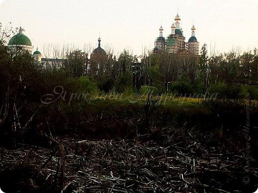 """Решила выставить серию лесных """"открывашек"""".)) Парад открывают фото со вчерашней прогулки.))) Гуляли далеко, на новый мост. фото 7"""
