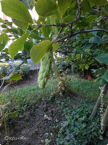 Уж август на дворе.Скоро придется наводить порядок во саду и в огороде и для садового инвентаря я реанимировала большой военный сундук. фото 13