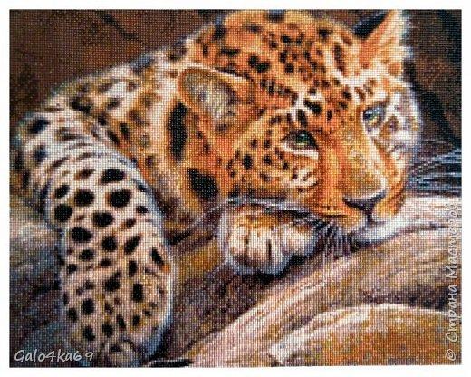 Леопард размер 40*50 см фото 1