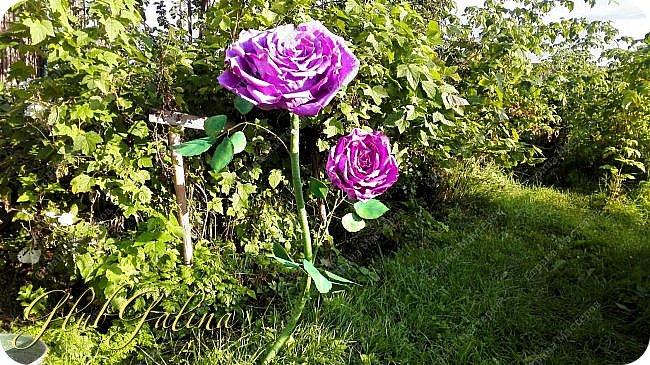 Моя пробная работа больших цветов.... фото 1
