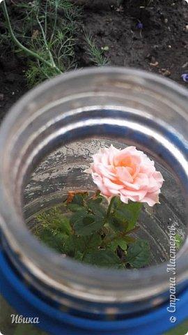 О розах. фото 44