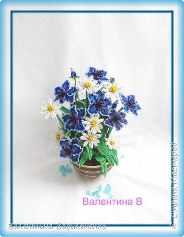 Мои новые тюльпаны. фото 6