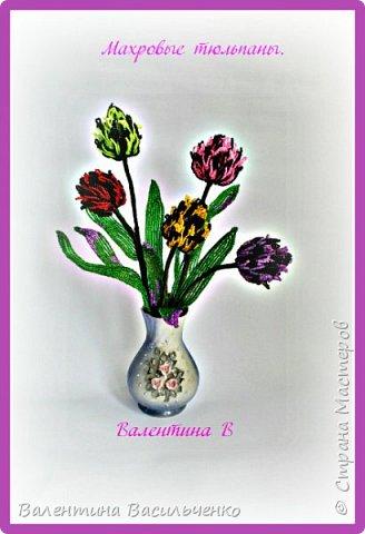 Мои новые тюльпаны. фото 1