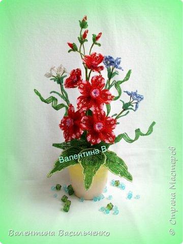 Мои новые тюльпаны. фото 7
