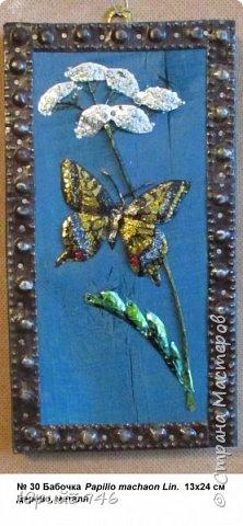 Махаон - красивая бабочка, которая редко находится в покое. Сегодня мне повезло - махаон прилетел на полянку, заросшую клевером и долго  позировал, перелетая с цветка на цветок. Полюбуйтесь этим живым украшением... фото 7