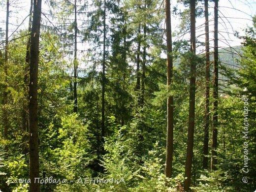 Друзья! А теперь мы с вами переместимся в потрясающе прекрасное Прикарпатское село Шешоры! Я очень люблю шешорские водопады, горные пейзажи, сельские хатки с деревянными тыночками  и лесные тропки с россыпями грибов! фото 15