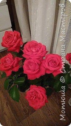 Всем привет, приглашаю к себе на дачу) Дачница я молодая - 3 года мне всего, но кое-что есть))) Этой розой налюбоваться не могу, в том году она не так пышкно цвела, а аромат! Цветы 15 см в диаметре) фото 5