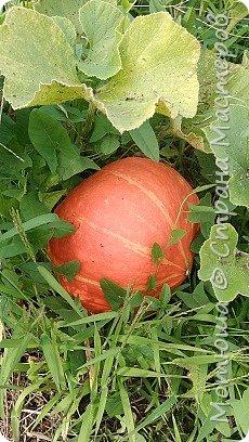 Всем привет, приглашаю к себе на дачу) Дачница я молодая - 3 года мне всего, но кое-что есть))) Этой розой налюбоваться не могу, в том году она не так пышкно цвела, а аромат! Цветы 15 см в диаметре) фото 21