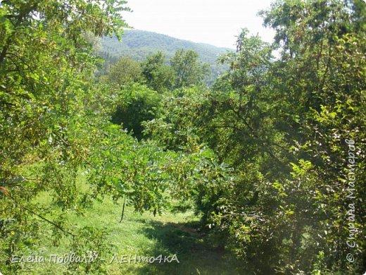 Друзья! А теперь мы с вами переместимся в потрясающе прекрасное Прикарпатское село Шешоры! Я очень люблю шешорские водопады, горные пейзажи, сельские хатки с деревянными тыночками  и лесные тропки с россыпями грибов! фото 50