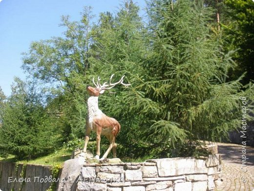 Друзья! А теперь мы с вами переместимся в потрясающе прекрасное Прикарпатское село Шешоры! Я очень люблю шешорские водопады, горные пейзажи, сельские хатки с деревянными тыночками  и лесные тропки с россыпями грибов! фото 55