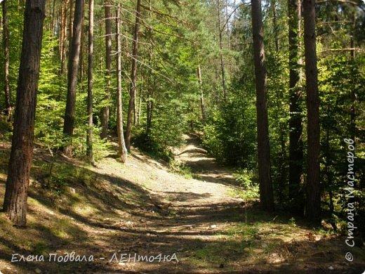 Друзья! А теперь мы с вами переместимся в потрясающе прекрасное Прикарпатское село Шешоры! Я очень люблю шешорские водопады, горные пейзажи, сельские хатки с деревянными тыночками  и лесные тропки с россыпями грибов! фото 14