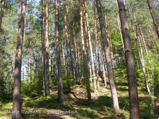Друзья! А теперь мы с вами переместимся в потрясающе прекрасное Прикарпатское село Шешоры! Я очень люблю шешорские водопады, горные пейзажи, сельские хатки с деревянными тыночками  и лесные тропки с россыпями грибов! фото 7