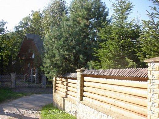 Друзья! А теперь мы с вами переместимся в потрясающе прекрасное Прикарпатское село Шешоры! Я очень люблю шешорские водопады, горные пейзажи, сельские хатки с деревянными тыночками  и лесные тропки с россыпями грибов! фото 54