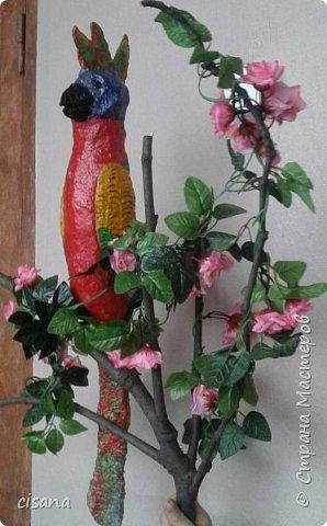 попугай фото 4