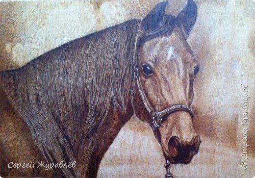 Задумчивая лошадь.