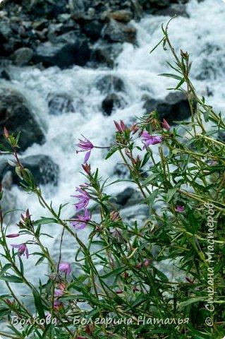 И вот настали последние два дня. Все мастер-классы проведены, осталось только любоваться красотами Архыза. В первую очередь, с утра, мы отправились на Софийские водопады. фото 54