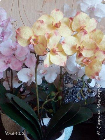 всем привет! сегодня у меня орхидеи из фома.( обкатка ствола и бутончики  из х\ф) фото 11