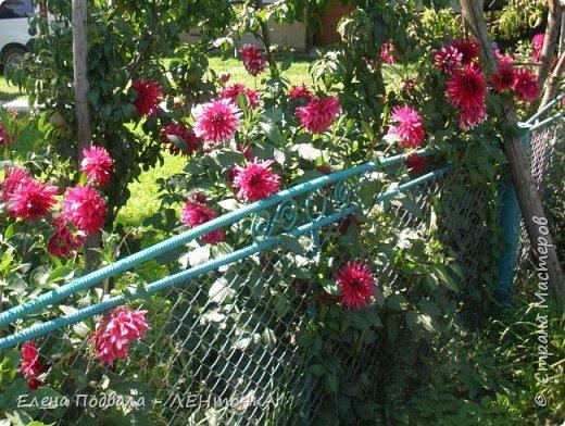 Приветствую, дорогие друзья! Еще хотелось бы поделиться этой цветочной красотой Прикарпатья. с. Шешоры фото 1