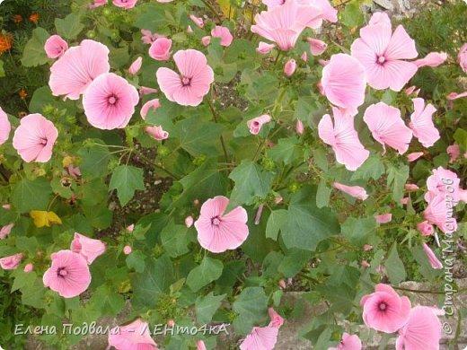 Приветствую, дорогие друзья! Еще хотелось бы поделиться этой цветочной красотой Прикарпатья. с. Шешоры фото 4