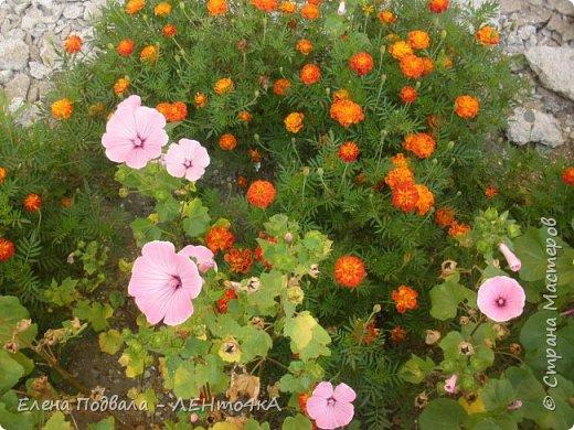 Приветствую, дорогие друзья! Еще хотелось бы поделиться этой цветочной красотой Прикарпатья. с. Шешоры фото 5