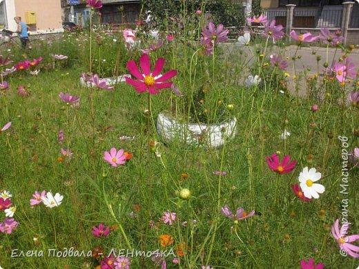 Приветствую, дорогие друзья! Еще хотелось бы поделиться этой цветочной красотой Прикарпатья. с. Шешоры фото 6