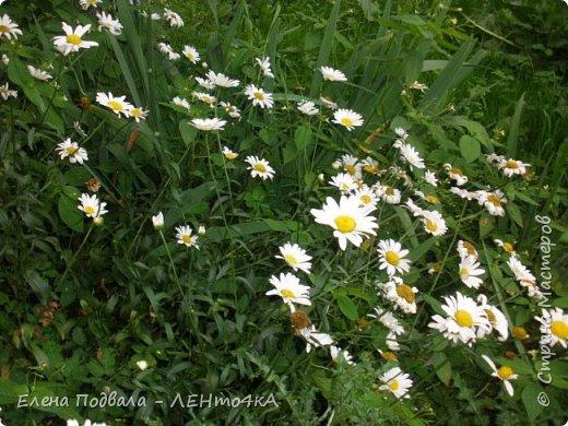 Приветствую, дорогие друзья! Еще хотелось бы поделиться этой цветочной красотой Прикарпатья. с. Шешоры фото 8
