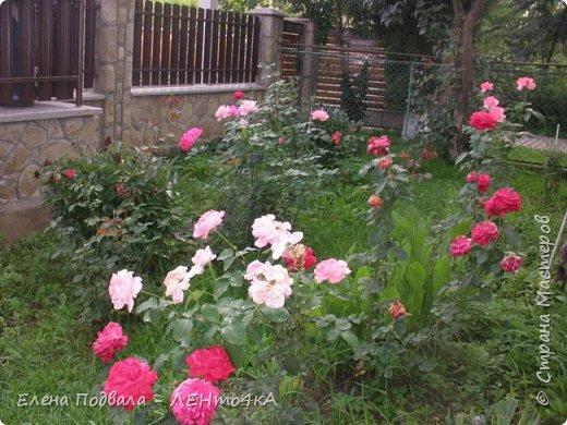 Приветствую, дорогие друзья! Еще хотелось бы поделиться этой цветочной красотой Прикарпатья. с. Шешоры фото 7