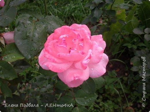 Приветствую, дорогие друзья! Еще хотелось бы поделиться этой цветочной красотой Прикарпатья. с. Шешоры фото 14