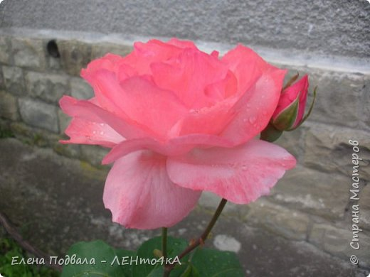 Приветствую, дорогие друзья! Еще хотелось бы поделиться этой цветочной красотой Прикарпатья. с. Шешоры фото 11