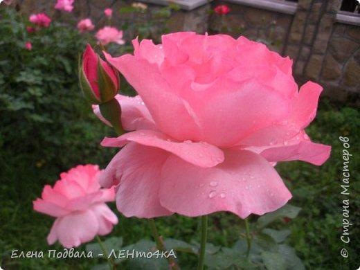 Приветствую, дорогие друзья! Еще хотелось бы поделиться этой цветочной красотой Прикарпатья. с. Шешоры фото 12