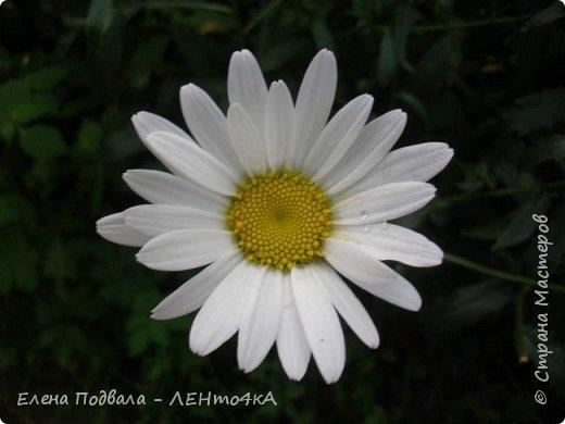 Приветствую, дорогие друзья! Еще хотелось бы поделиться этой цветочной красотой Прикарпатья. с. Шешоры фото 9