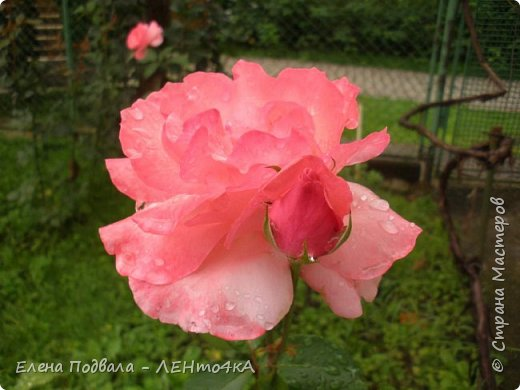 Приветствую, дорогие друзья! Еще хотелось бы поделиться этой цветочной красотой Прикарпатья. с. Шешоры фото 13