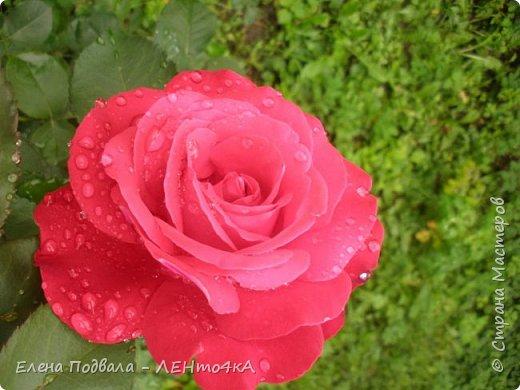 Приветствую, дорогие друзья! Еще хотелось бы поделиться этой цветочной красотой Прикарпатья. с. Шешоры фото 15